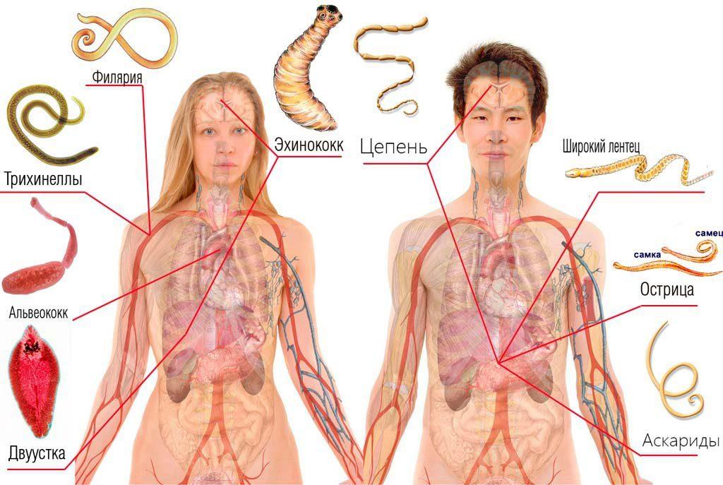 Антипаразитарное средство LUCKLIFE